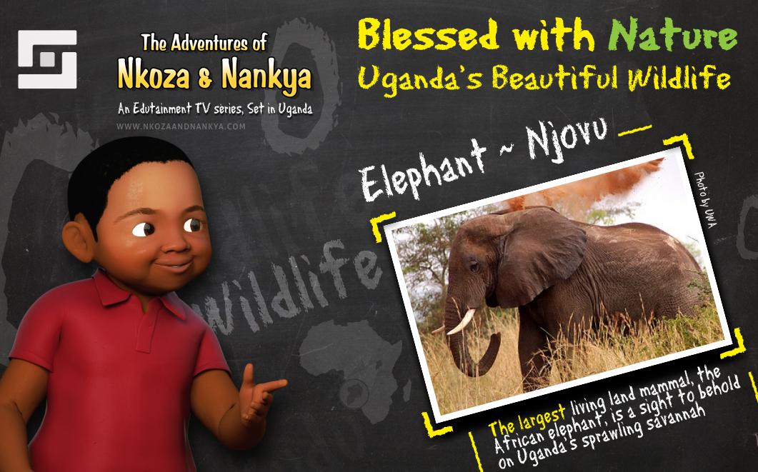nkoza_and_Nankya_Wildlife_Count_Down_03a